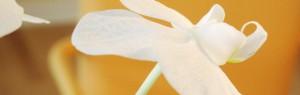 Informationen zur Hautkrebsvorsorge von Dr.Besing in Gauting